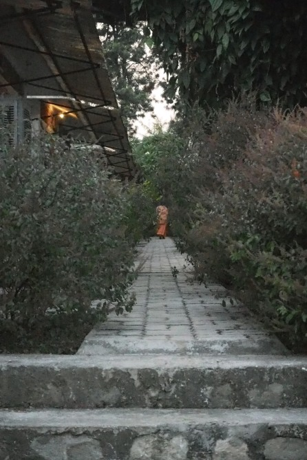 Swami wandering the grounds
