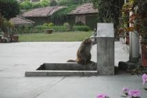 Monkeys....